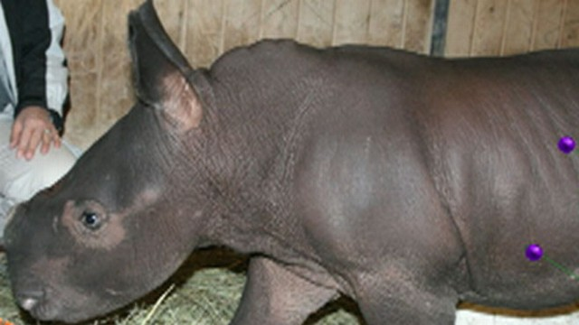 VIDEO: Albuquerque BioPark Zoo Welcomes Baby Rhino