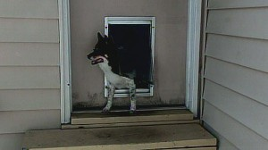 VIDEO: Pet doors have led to the deaths of more than 100 children.