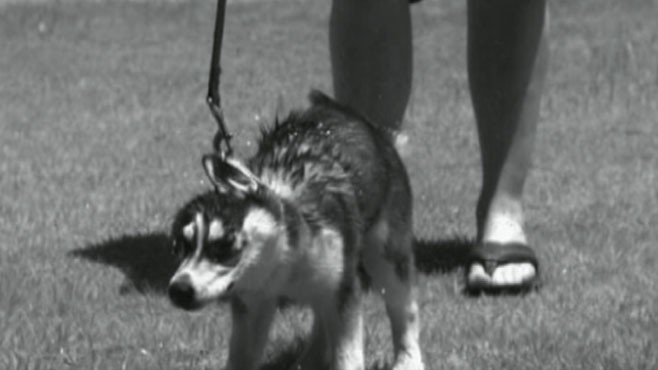 VIDEO: A Look at Why Dogs Shake