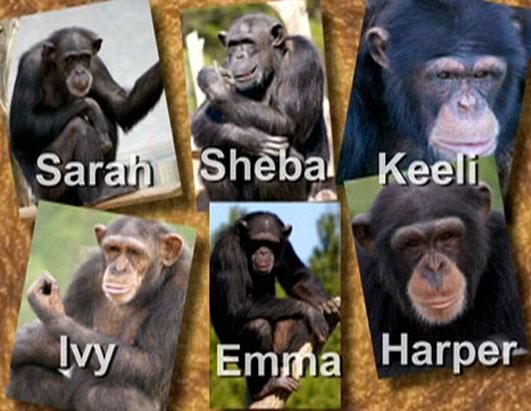 Big Daddies at Chimp Haven