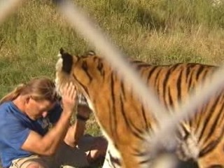 Watch: Arizona Zookeeper Swims With Bengal Tiger