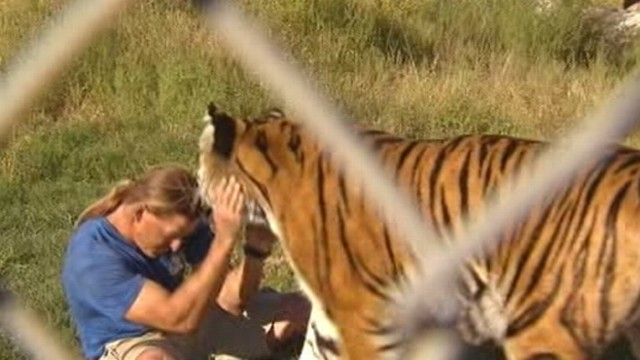 VIDEO: Animal experts worry about the consequences of Jeff Harwells swim with tigers.