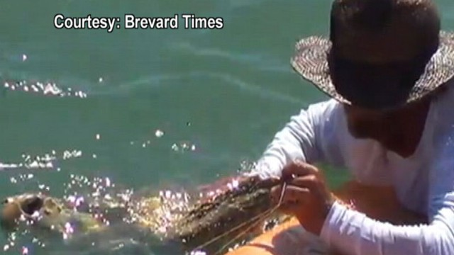 VIDEO: The loggerhead sea turtle was tangled in fishing lines off the Cocoa Beach Pier.