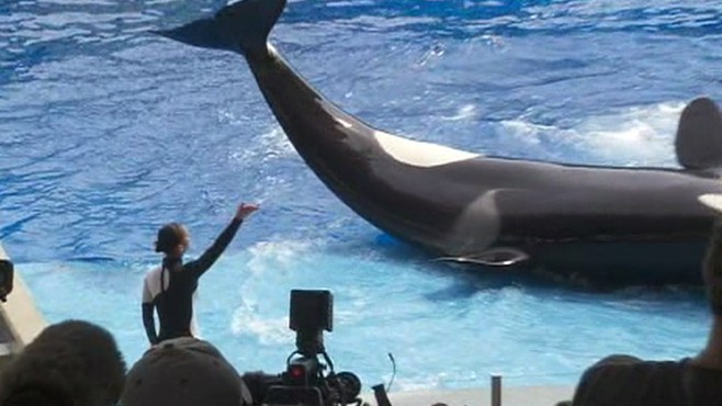 VIDEO: Trainer Dawn Brancheau was drowned by the killer whale a year ago.