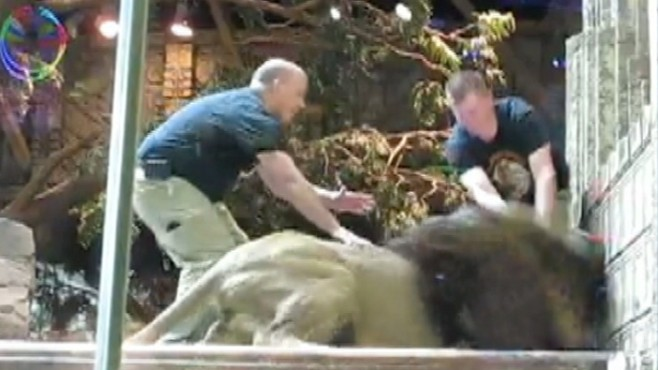 VIDEO: Jack Hanna weighs in on the lion that lunged at its trainer at the MGM Grand.