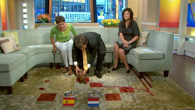 VIDEO: Can George Stephanopoulos' dachshund correctly predict the World Cup winner?