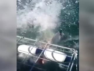 Watch: Shark Attacks Newlyweds on Honeymoon: Caught on Tape