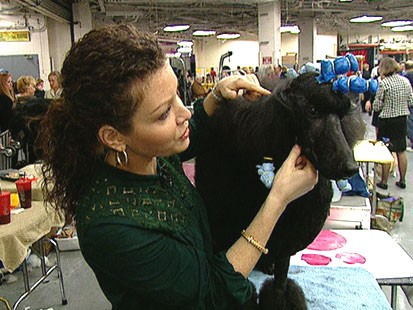 VIDEO: Westminster dog show is feeling the stress of a tough economy.