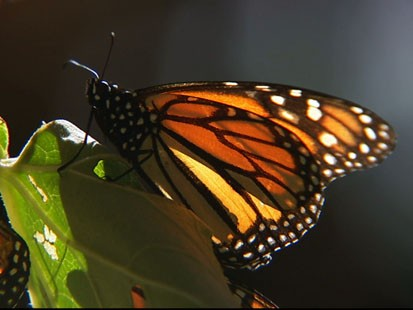 VIDEO: Weekend Window: Butterfly Sanctuary