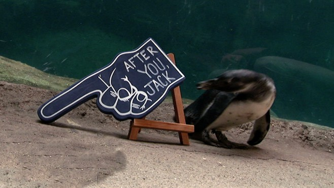 VIDEO: Star animals at the Columbus Zoo share their feelings in three words.