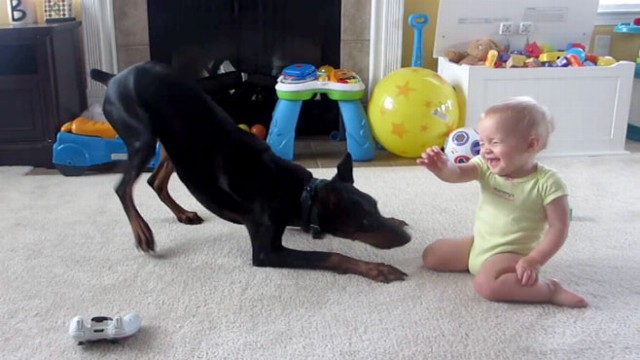 VIDEO: Pet Doberman Plays With 1-Year-Old Baby