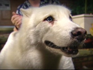 Watch: Dog Found Outside Hospital Where Owner Recovers
