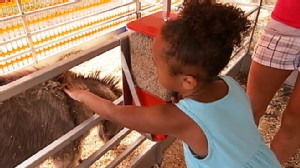 VIDEO: Health Safety Tips at the Petting Zoo