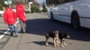 VIDEO: ABC News Matt Gutman tweets photo of dogs that escaped the citys recent crackdown on strays.