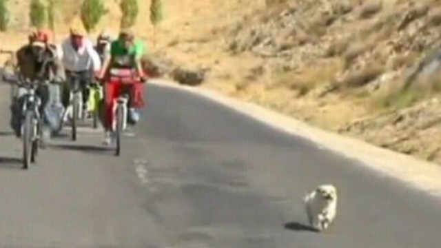 VIDEO: Dog follows bicycle riders on a 1,000-mile trek for 20 days.