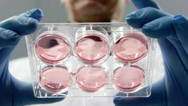 VIDEO: The fat-free burger was created by Dutch researchers from stem cells grown in a lab.