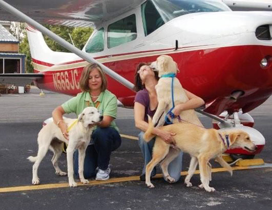 Pilots N Paws