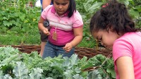 PHOTO Children get hands-on education about where food comes from at the New York Restoration Project?s ?Feed The Seed? Summer Camp in New York City.