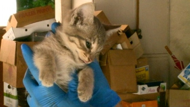 Video: Kitten Survives 2-Day Trip in Cars Engine