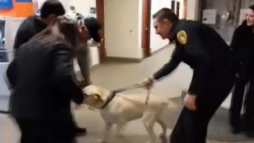 Labrador was returned to its New Jersey family thanks to police officers and a microchip.