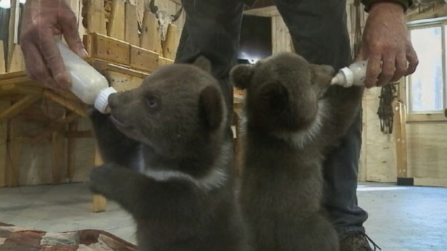 Shalom Wildlife Sanctuary owners David and Lana Fechter took in twins named Lewis and Clark.