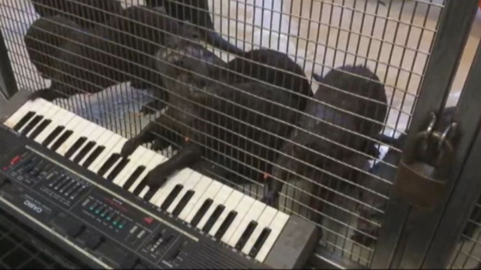 VIDEO: Even an orangutan got in on the musical action at Smithsonians National Zoo.