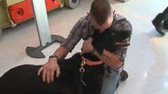 Lance Corporal Jeff DeYoung adopted Cena, a black Lab, who saved his life in Afghanistan.