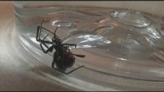 VIDEO: Apparent Black Widow Spider Found Amongst Michigan Womans Grapes
