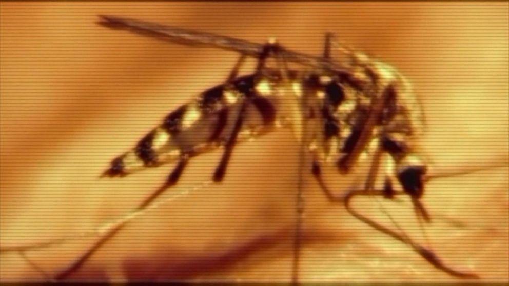 Good Morning America Zika Virus : Cdc confirms zika virus causes rare microcephaly birth