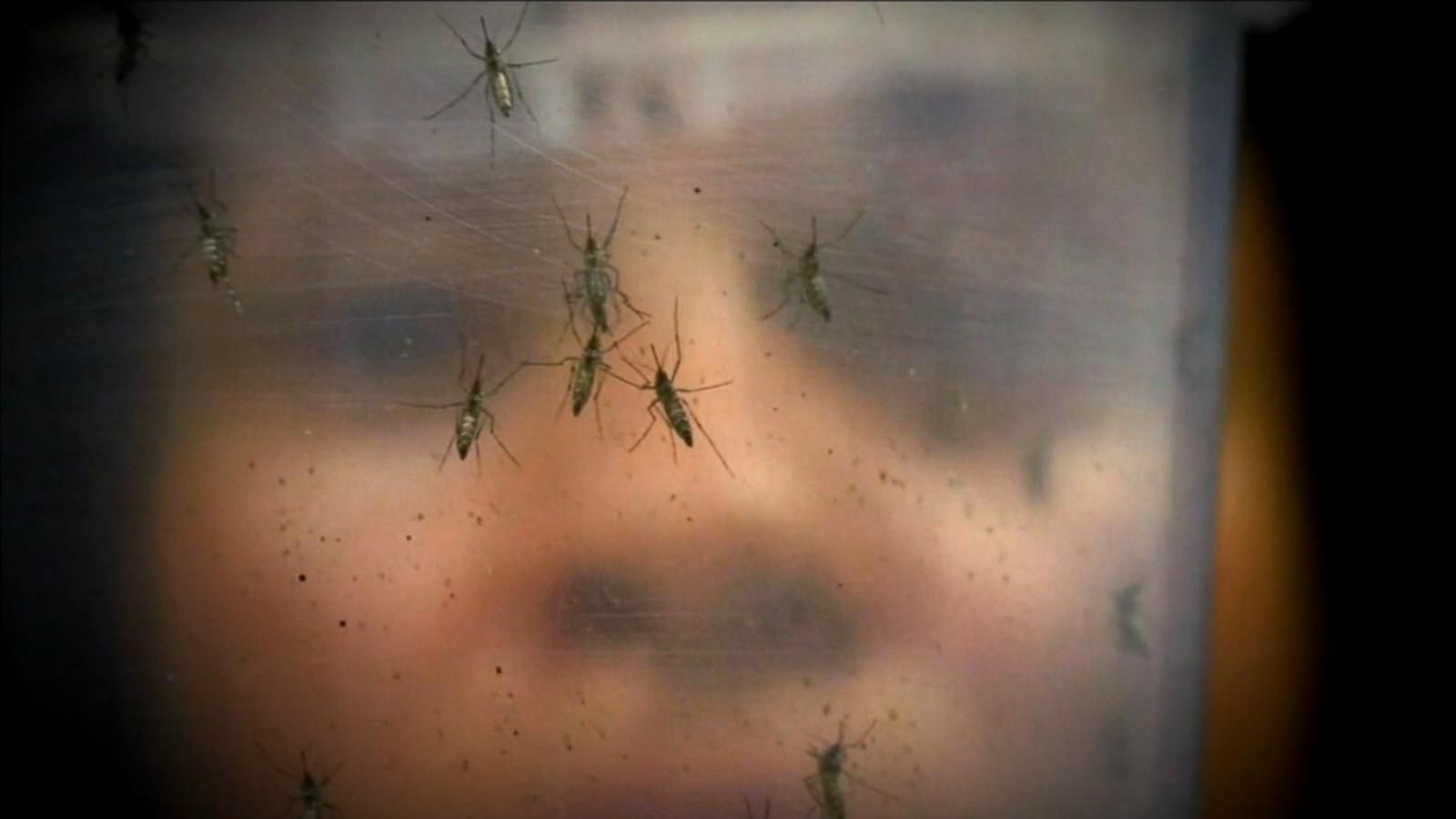 Five NYC infants have been born with Zika-related birth defects this year.