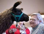 Therapy Llamas Visit Patients
