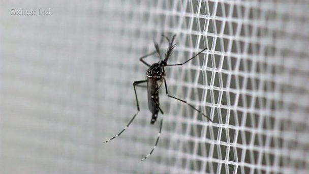 http://a.abcnews.com/images/Health/ABC_zika_mosquito_as_160701_16x9_608.jpg