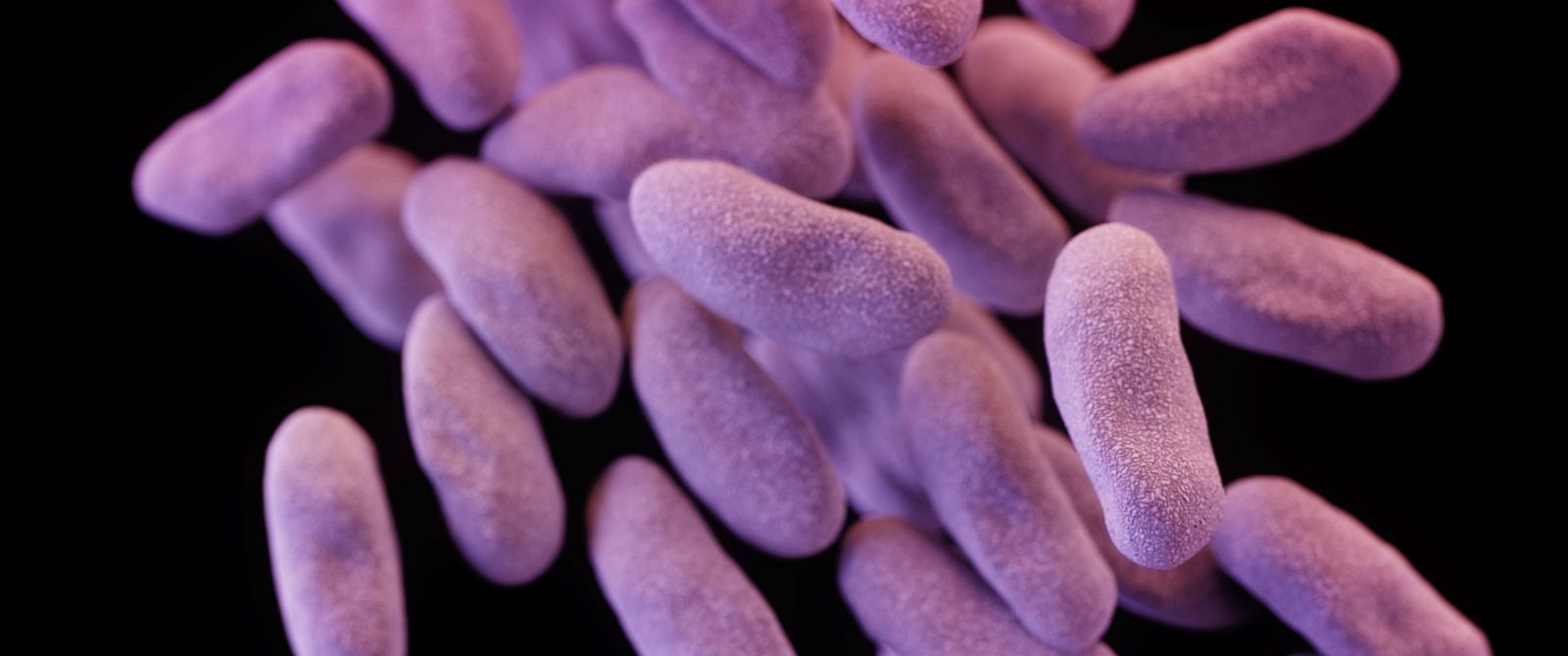 PHOTO: An illustration of a group of carbapenem-resistant Enterobacteriaceae bacteria. The image was based on scanning electron micrographic imagery.
