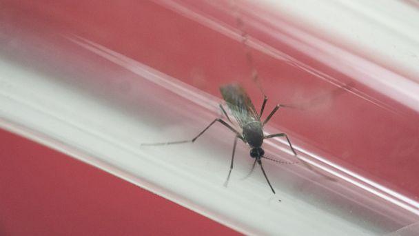 http://a.abcnews.com/images/Health/AP_Zika_Mosquito_MEM_160617_16x9_608.jpg