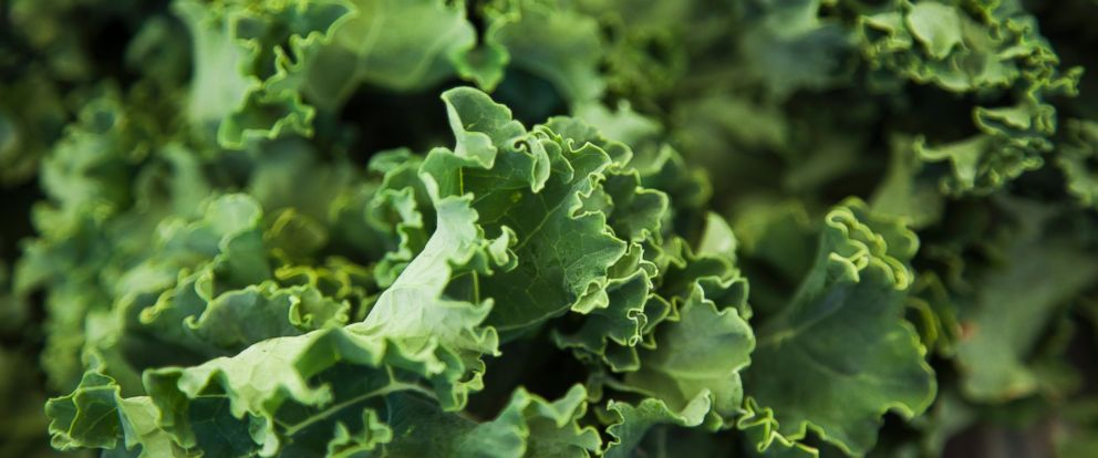 PHOTO: October 1st is National Kale Day.