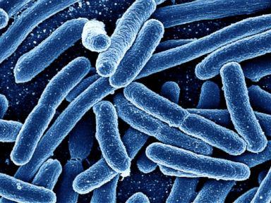 Antibiotic-Resistant Strain of Bacteria Renews Fears of Superbug