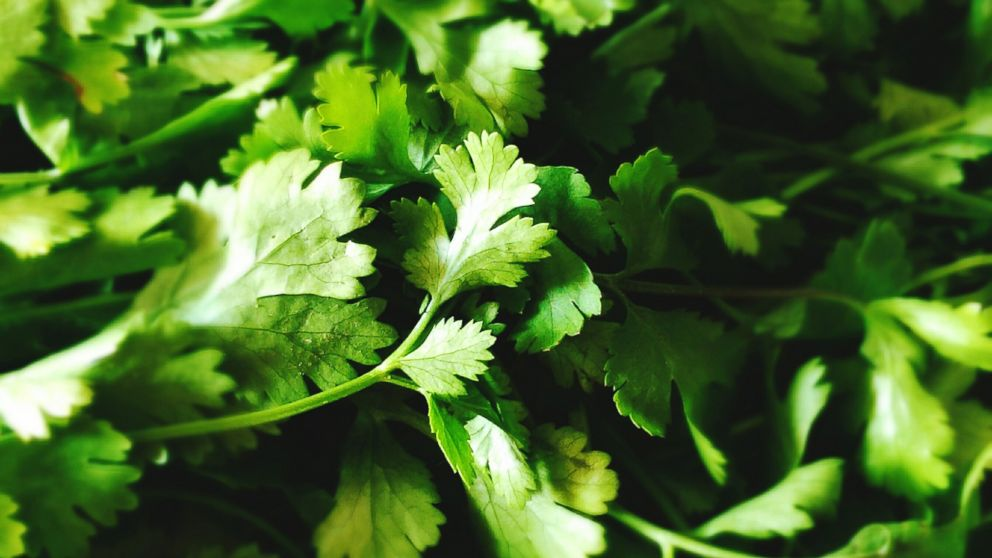 PHOTO: Some Mexican cilantro has been banned because of conditions found in the fields where it is grown.