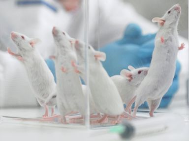 Another Anti-Aging Treatment… For Mice