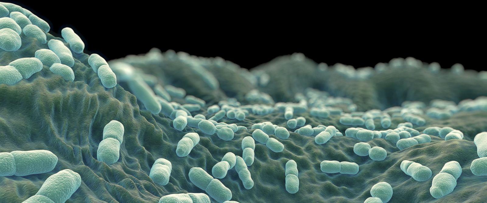 PHOTO: Listeria Bacteria