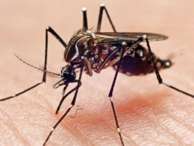 What the Heck Is Chikungunya?