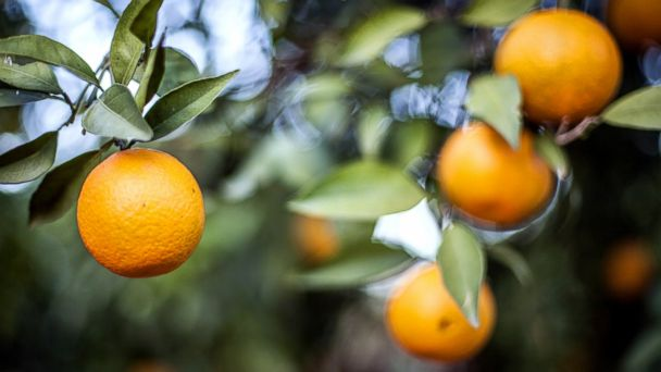 PHOTO: Oranges may help improve your skin.