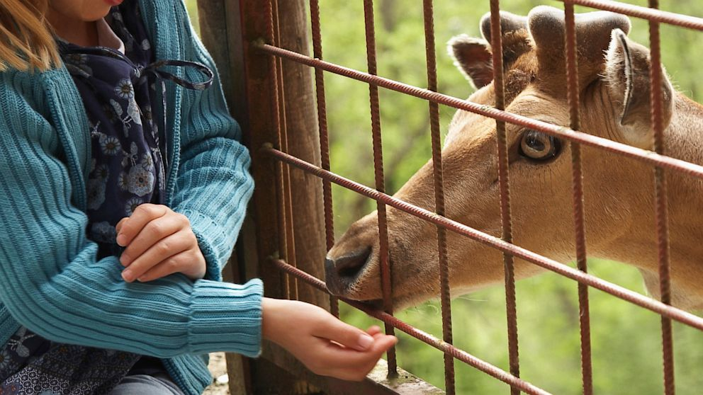 PHOTO: A child feeds a deer at a petting zoo in this file photo.