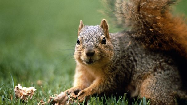 GTY squirrel nt 130725 16x9 608 Plague Infected Squirrel Closes California Campground