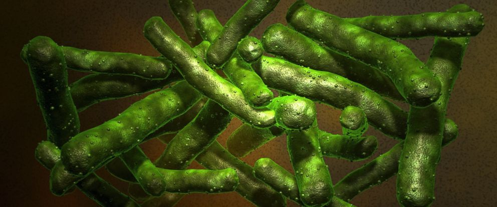 PHOTO: Mycobacterium tuberculosis is shown in this undated stock image.