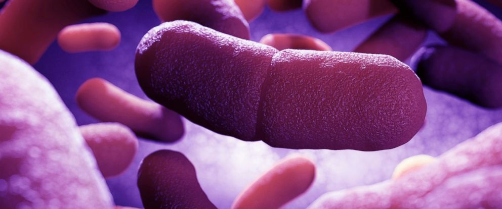 PHOTO: Yersinia pestis, the bacterium that causes plague, is seen in this undated stock image.