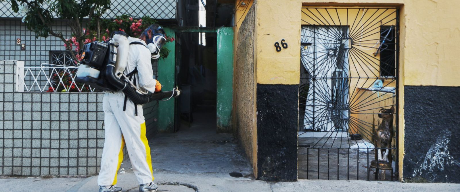 PHOTO: A dog looks on as a health worker fumigates in an attempt to eradicate the mosquito which transmits the Zika virus, Jan. 28, 2016, in Recife, Brazil.