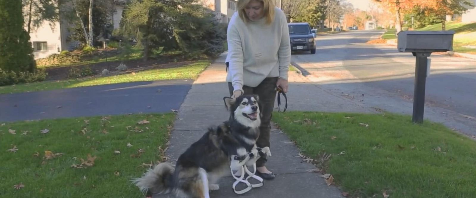 PHOTO: Derby the Husky pup got a new set of 3-D printed paws that help her stand up straight.