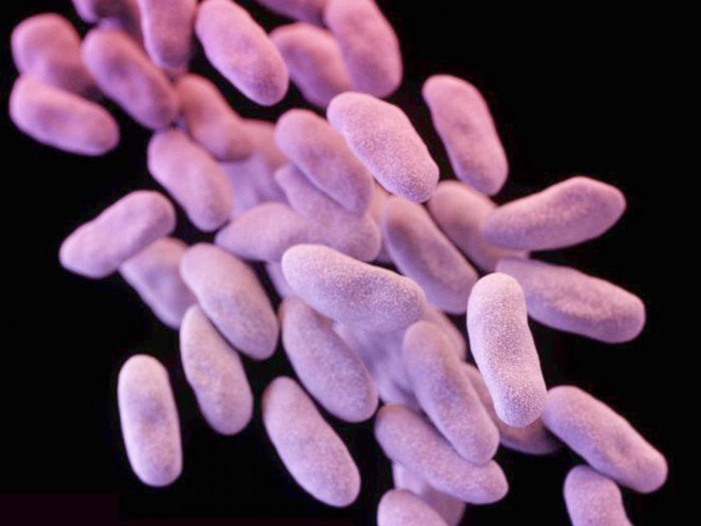 PHOTO: Carbapenem-resistant Enterobacteriaceae (CRE) bacteria is pictured in this medical illustration provided by the Centre of Disease Control and Prevention (CDC).