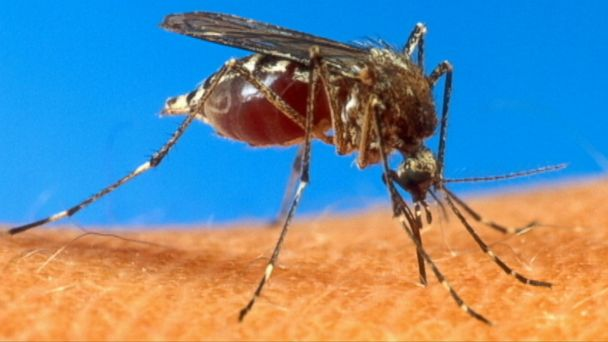 VIDEO: Health officials confirm that two people bitten by mosquitoes have become infected with the virus.
