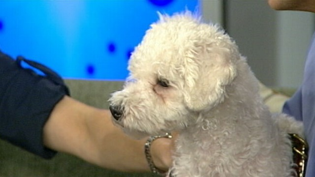 VIDEO: Dr. Tony Kremer with tips on keeping you and your pets healthy.